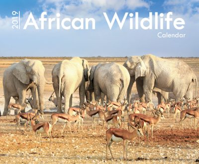 A4_African Wildlife 2019 Cover