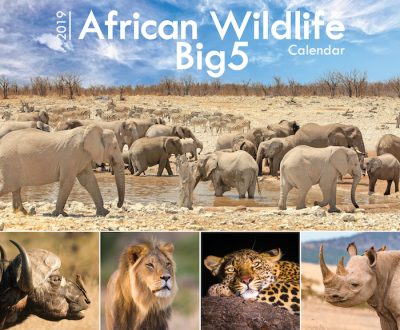 A4_Wildlife Big5 2019 Cover