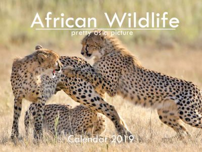 A6_African Wildlife 2019 Cover