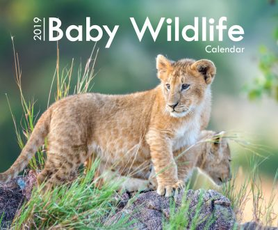 A4_Baby Wildlife 2019 Cover