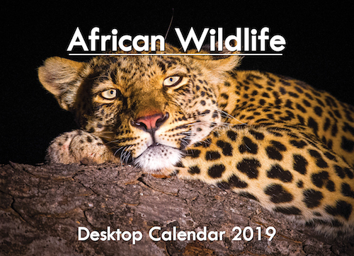 A5_DESKTOP African 2019 Cover