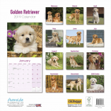 golden retriever back