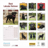labrador black back