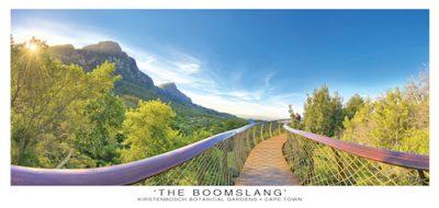Kirstenbosch Boomslang Postcard