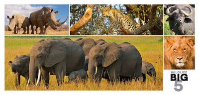 The Big 5 Wildlife Postcard