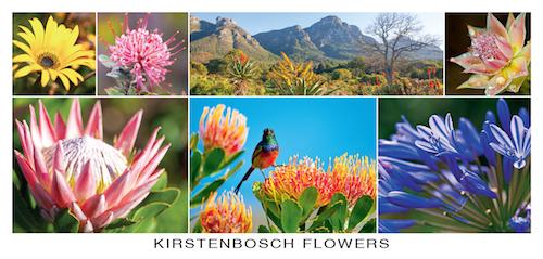 Flowers-Kirstenbosch.indd